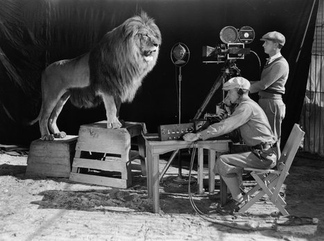 In 1927, the MGM lion's plane crashed and he survived on sandwiches | Vintage and Retro Style | Scoop.it