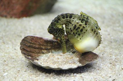 5 Weird Marine Life Facts | Indigo Scuba | Scoop.it