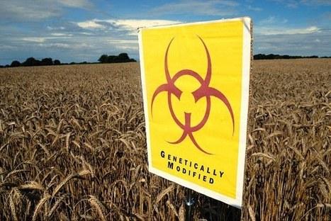 Hershey bans GM ingredients | sustainablity | Scoop.it