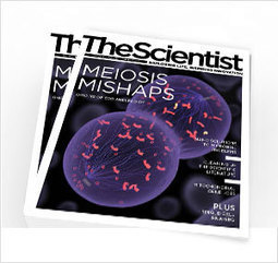 Opinion: Reimagining the Paper | The Scientist Magazine® | Research Tools Box | Scoop.it