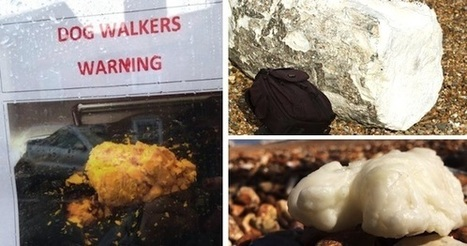 Palm Oil 'Fatbergs' as Big as Boulders Washing Up on UK Beaches | Farming, Forests, Water, Fishing and Environment | Scoop.it