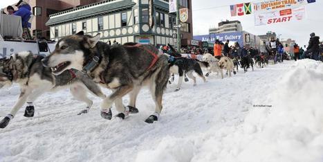 Winter activities in Anchorage Alaska | Visit Anchorage | Alaska | Scoop.it