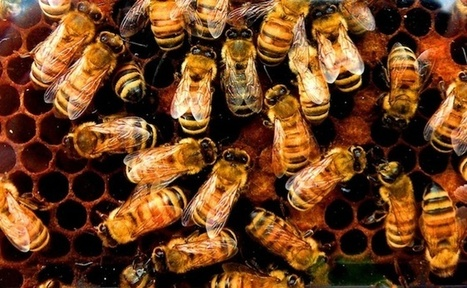 One-Third of U.S. Honeybee Colonies Died Last Winter, Threatening Food Supply | Wired Science | Wired.com | Vertical Farm - Food Factory | Scoop.it
