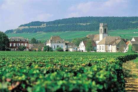 Bientôt de nouveaux grands crus en #Bourgogne ? -   Culture   Scoop.it