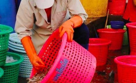 Les liens entre #Lidl et l'exploitation de travailleurs thaïlandais dévoilés. | TRADCONSULTING 4 YOU | Scoop.it