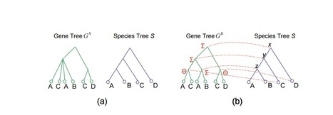 On the Complexity of Duplication-Transfer-Loss Reconciliation with Non-binary Gene Trees | Genomics and metagenomics of microbes | Scoop.it