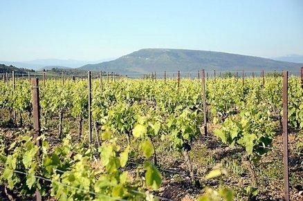Limoux : 2013, la promesse d'un millésime exceptionnel - L'indépendant.fr | Le vin quotidien | Scoop.it