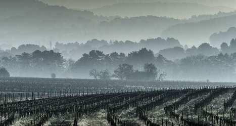 Les conséquences du gel dans le vignoble - VIDEO | Le Vin et + encore | Scoop.it