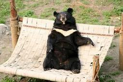 Animals Can Be Ambassadors For Forgiveness, Generosity, Peace, Trust, and Hope | Bears | Scoop.it