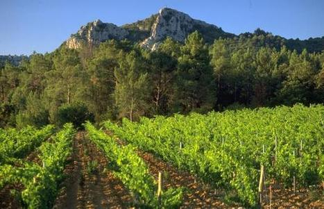 Tweet from @LanguedocWineUK | Saint-Chinian Wines | Scoop.it