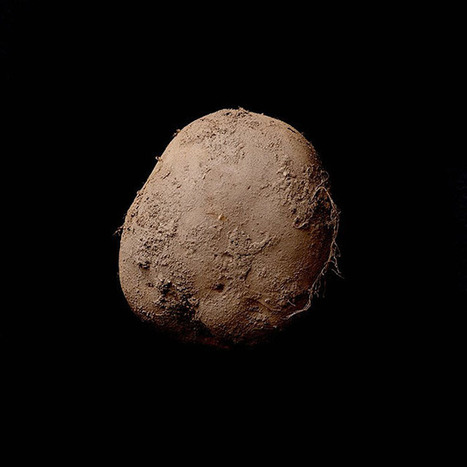 This Photo of a Potato Sold for Over $1,000,000 | xposing world of Photography & Design | Scoop.it