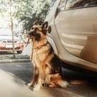 Quand un chien se met au service des personnes âgées | Société et vieillissement en France | Scoop.it