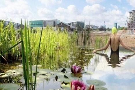 Of Soil and Water : une piscine publique naturelle et auto-nettoyante   Efficycle   Scoop.it