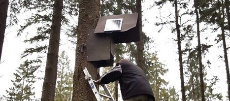 Networked Solar Birdhouses Deep in the Woods by siluxmedia | Raspberry Pi | Scoop.it