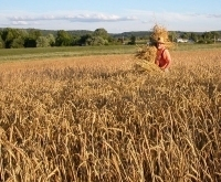 Small-scale grains: Another piece of the locavore puzzle   Climate Change + Food   Scoop.it