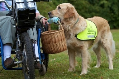 What is an assistance dog? - Dogs for the Disabled | The Dog Connection TV | Scoop.it