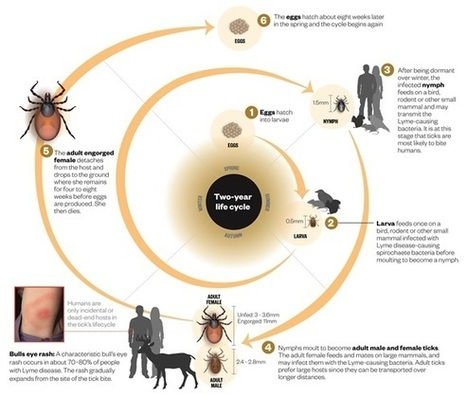 Treating Lyme disease: when will science catch up? | Lyme Disease & Other Vector Borne Diseases | Scoop.it