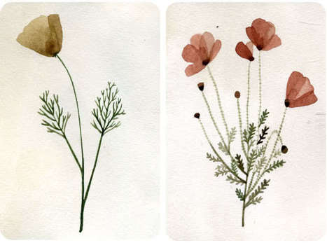 yelena bryksenkova: herbarium | Herbaria | Scoop.it