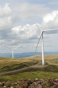 Sea eagle killed at Scottish windfarm, but persecution remains greatest threat   British Birds of Prey   Scoop.it