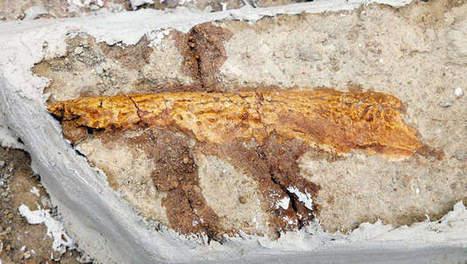 Dinosaurus van 75 miljoen jaar opgegraven in Frankrijk | KAP-ANGELO | Scoop.it