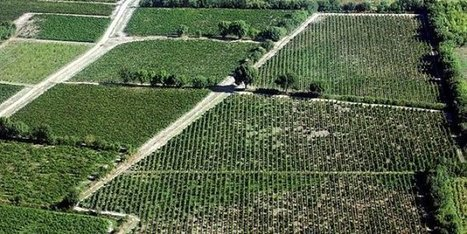 Des drones pour une meilleure viticulture | Le vin quotidien | Scoop.it