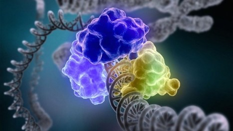Optical Control of CRISPR/Cas9 Gene Editing   SynBioFromLeukipposInstitute   Scoop.it