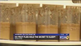 Fruit flies hold the secret to sleep: Medicine's next big thing? | Animals R Us | Scoop.it