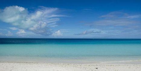 Quand l'océan se meurt, la planète aussi | Politiques environnementales | Scoop.it