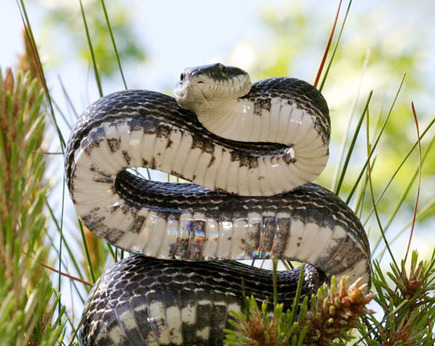 2,600 Live Snakes Found in Shipment Marked 'Fruit' | Animals R Us | Scoop.it