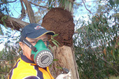 Bamboo | Home Termite Control | Scoop.it