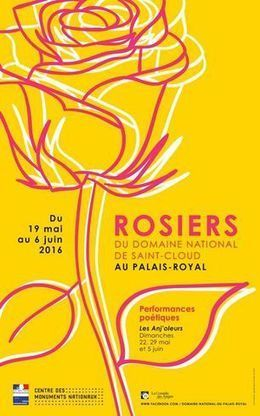 Les Roses de Monsieur reviennent au Palais-Royal / Domaine national de Saint-Cloud | whynotblogue | Scoop.it