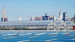 Yale Environment 360: Above a Whole Foods Market, A Greenhouse Grows in Brooklyn | Peer2Politics | Scoop.it