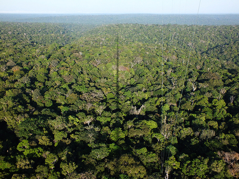At 1,066 Feet Above Rainforest, A View of the Changing Amazon by Daniel Grossman: Yale Environment 360 | Rainforest EXPLORER:  News & Notes | Scoop.it