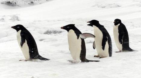 Dérèglement climatique, le record qu'on n'attendait pas: la Terre n'a jamais eu autant de #banquise qu'en ce moment… Que se passe-t-il? | Hurtigruten Arctique Antarctique | Scoop.it