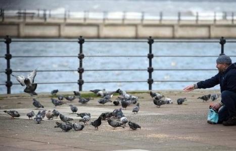 Nourrir les oiseaux sauvages favorise les espèces envahissantes comme les pigeons | Biodiversité | Scoop.it