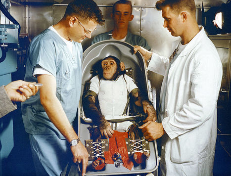 PETA Asks Kennedy Space Center to Open Chimpanzee Empathy Museum | Empathy and Animals | Scoop.it