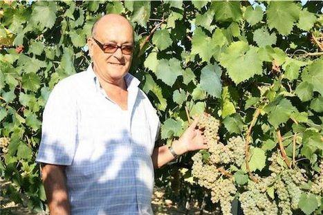 Pecorino: Marche's Comeback Kid | Wines and People | Scoop.it