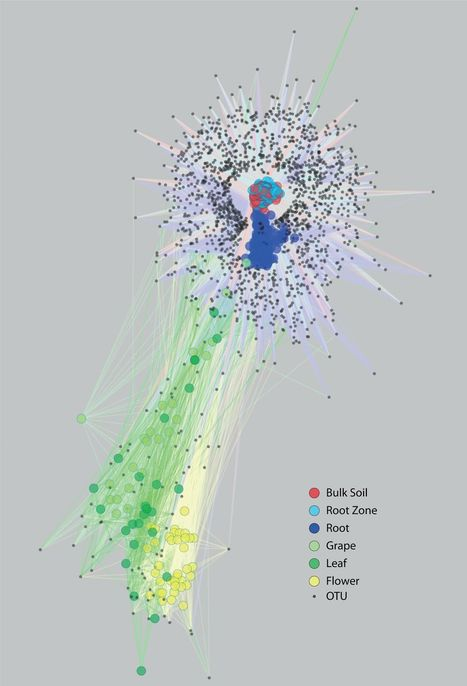 The Soil Microbiome Influences Grapevine-Associated Microbiota | Winemak-in | Scoop.it