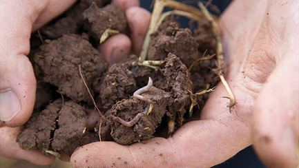 Rothamsted mention: Why farmyard manure can add 1t/ha to yields in just two seasons | BIOSCIENCE NEWS | Scoop.it