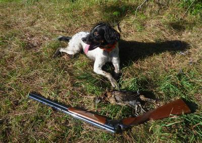 Never trust your hunting dog with a gun - Outdoors blog - The Spokesman-Review | Behind the Curtain on TPPRadio.com | Scoop.it