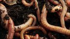 Alien worms 'threat to forests' | VCE Biology | Scoop.it