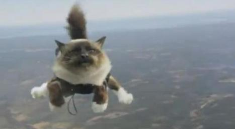 Polémique : une publicité avec des chats parachutistes fait scandale | Publicité Créative | Scoop.it