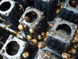 Comment éliminer les limaces et escargots au jardin | jardin | Scoop.it