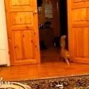 Chat a peur du son des sauts de Mario | Drôles de chats !!!!! | Scoop.it