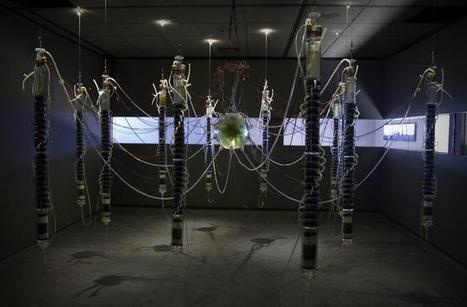 Plantas Autofotosintéticas by Gilberto Esparza PRIX ARS electronica 2015 / #mediaart #bioart #soundart | Digital #MediaArt(s) Numérique(s) | Scoop.it
