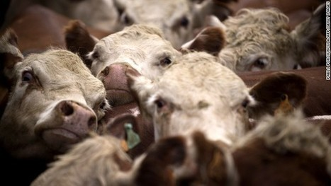 Mad cow disease-related death confirmed in Texas | Cuba freedom | Scoop.it