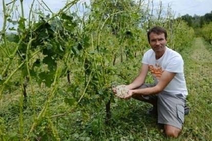 4000 à 5000 hectares de vigne détruits dans le Bordelais - Terre de Vins | News du vin par le Château la Levrette | Scoop.it