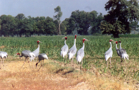Make Your Journey Most Wild Ever - Best Hotel Near Dudhwa | Ranthambore Jeep Safari | Scoop.it