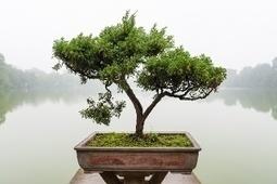 Prune the Tree | School Social Work Effectiveness | Scoop.it