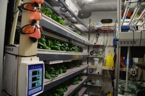 Can LED Advances Help Vertical Farms Take Root? | FoodHub Las Vegas | Scoop.it